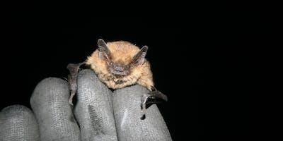 Bat Surveys: An Introduction to Bats, Buildings and Activity Surveys
