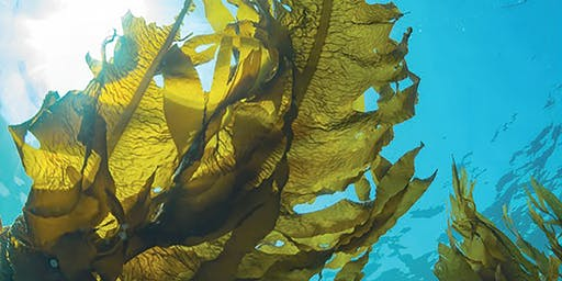 From Coffee to Seaweed: Engineering a safer world since 1760