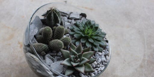Open Terrarium with Cacti & Succulents