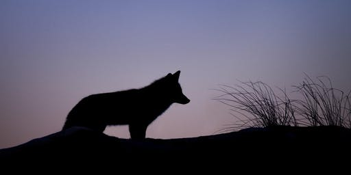 Walking With Wolf | Shamanic Journeying Monthly Series
