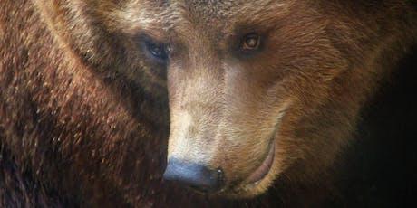 Bear Wisdom | Shamanic Journeying Monthly Series tickets