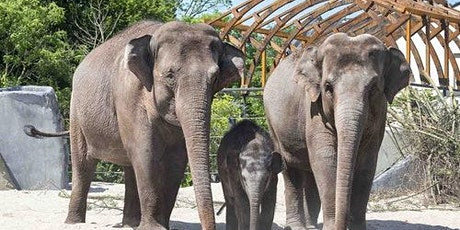 ARTIS Royal Zoo: Skip The Line tickets