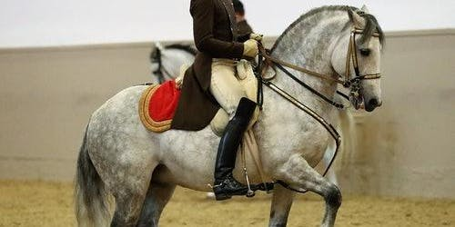 Spanish Riding School: Performances