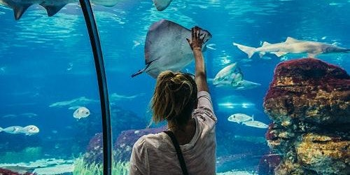 Barcelona Aquarium: Skip The Line