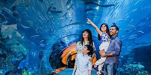 Dubai Aquarium & Underwater Zoo: Skip The Line