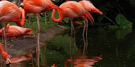 Flamingo Gardens tickets
