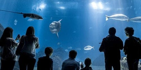 Oceanário de Lisboa: Skip The Line tickets