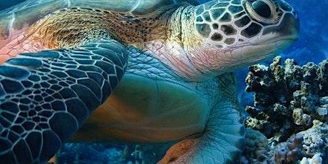 Livorno Aquarium: Skip The Line biglietti