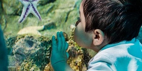 SEA LIFE Scheveningen tickets