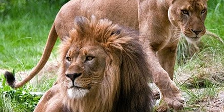 Bronx Zoo tickets