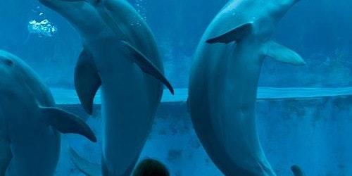 La Città dei Bambini & Aquarium of Genoa