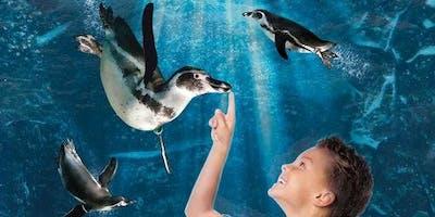 Aquarium of Cattolica: Skip The Line