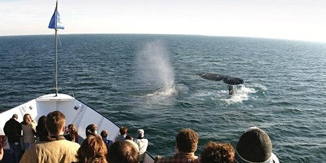 San Diego Whale & Dolphin Watching Adventure tickets