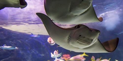 Ripley's Aquarium of Canada: Skip The Line