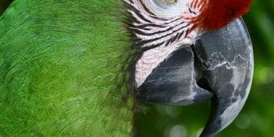 Military Macaw Sanctuary: Entrance & Transport
