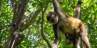 Croco Cun Zoo: Fast Track
