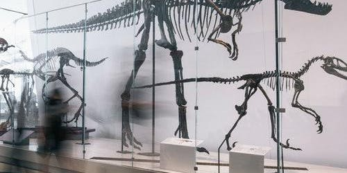 Royal Ontario Museum: Skip The Line