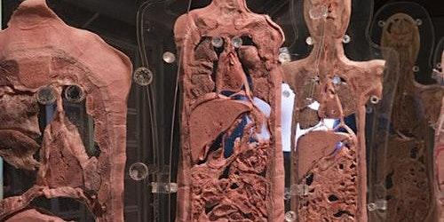 Human Bodies Exhibition: Skip The Line
