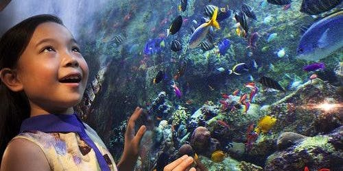 Aquaventure Waterpark & The Lost Chambers Aquarium