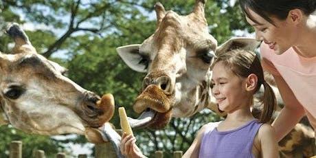 Park Hopper Plus: Singapore Zoo, River Safari, Night Safari & Jurong Bird Park tickets