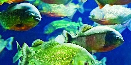 Adventure Aquarium: Fast Track tickets