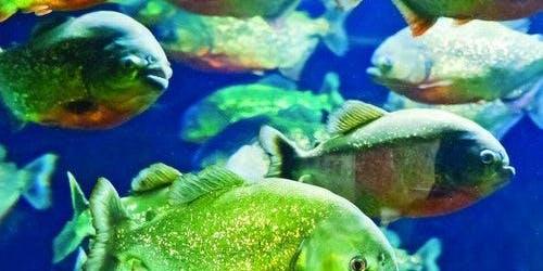 Adventure Aquarium: Fast Track