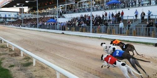 Greyhound Racing At Shelbourne Park Stadium
