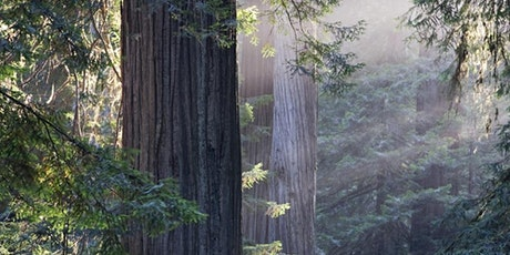 Muir Woods & Sausalito Tour from San Francisco tickets