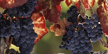 Napa Valley & Sonoma: Wine Tour from San Francisco tickets