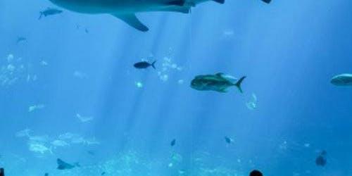 Georgia Aquarium: Fast Track