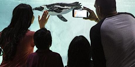 OdySea Aquarium tickets
