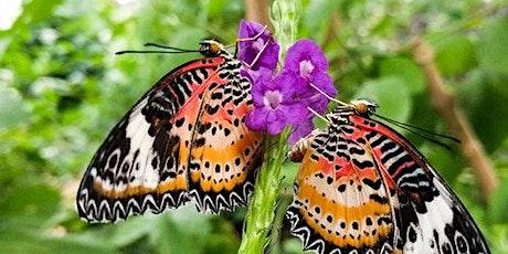Butterfly Wonderland tickets