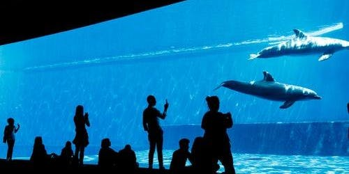 Aquarium of Genoa + City Tour: Skip The Line