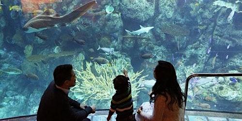 Aquarium of the Pacific: Skip The Line