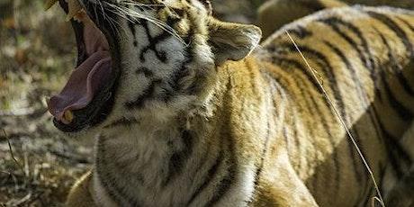Thoiry ZooSafari: Skip The Line billets