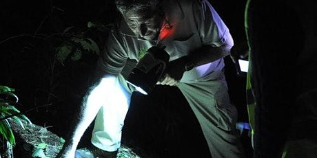 Nocturnal Rainforest & Glow Worm Evening 4WD Tour From Gold Coast tickets