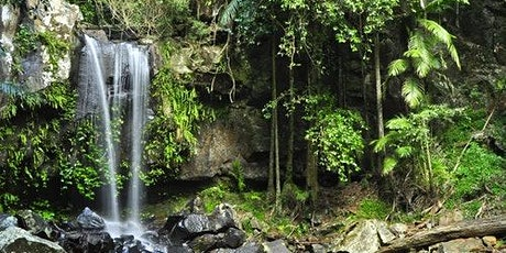 Mount Tamborine: 4 Wheel Drive Tour from Gold Coast tickets