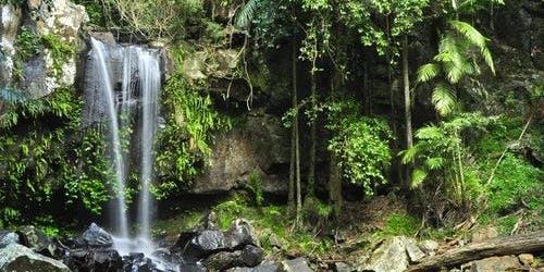 Mount Tamborine: 4 Wheel Drive Tour from Gold Coast