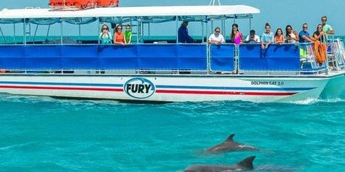 Dolphin Watching: Eco Tour