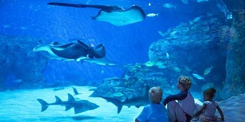 The Blue Planet - National Aquarium of Denmark