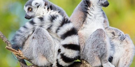 Woodland Park Zoo: Skip The Line tickets