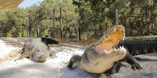 GatorWorld: Skip The Line