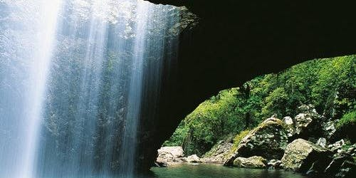 Natural Bridge and Springbrook National Park: 4WD Tour from Gold Coast