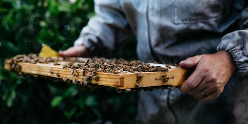 Backyard Beekeeping Workshop - Mayfield