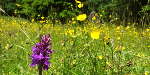 Carr House Meadows Reserve Advisory Group Meeting