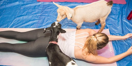 Healthworks Group Summer Series: Goat Yoga on the Rose Kennedy Greenway