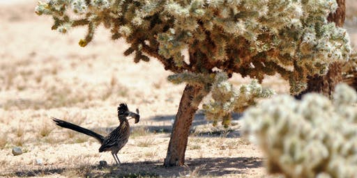 Birds of the Mojave Desert (Biology X404.2, 2 units) Fall 2019