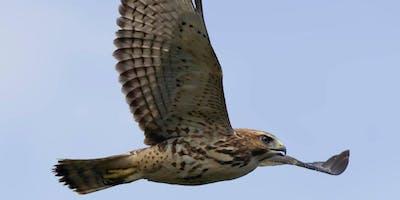 Early (Migratory) Birds of Houston Meadow
