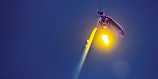 Firefly Fireworks II