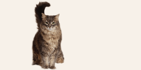 Online Cat Foster Orientation 6/19/19 tickets